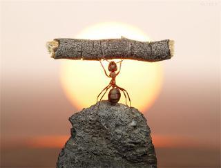 10_τρόποι_για_να_ξεφορτωθείτε-10 τρόποι για να ξεφορτωθείτε τα μυρμήγκια από το σπίτι σας!